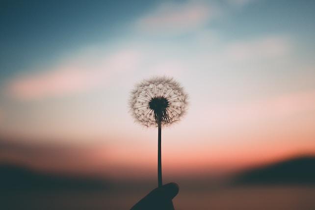Löwenzahn Pusteblume Sonnenuntergang - innere Ruhe, innerer Frieden