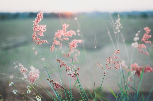 Blumen - innere Leere