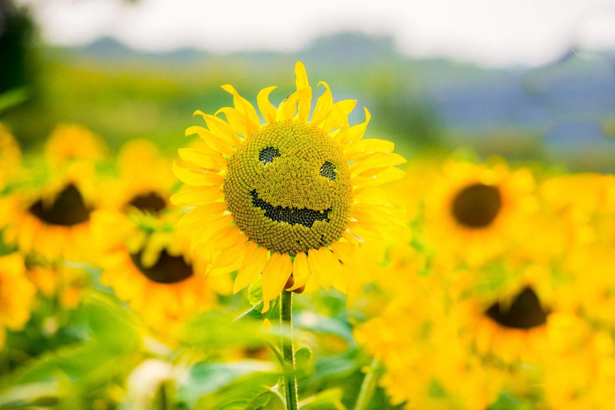 Enlightone: 11 Ways To Bring Positive Energy Into Your Life