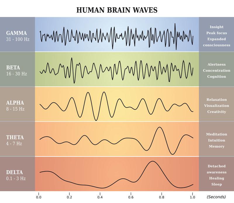 Hypnotic brainwaves