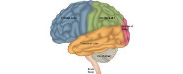 brain_stem_function