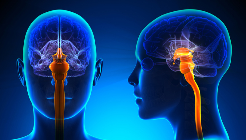 brain stem location and function