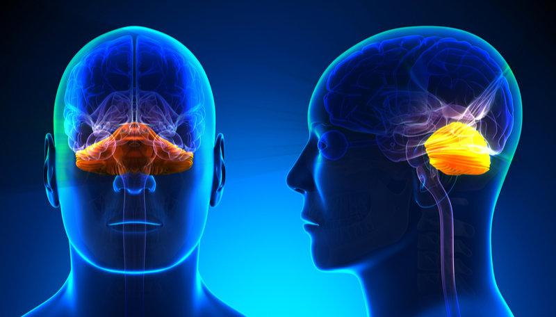 cerebellum definition