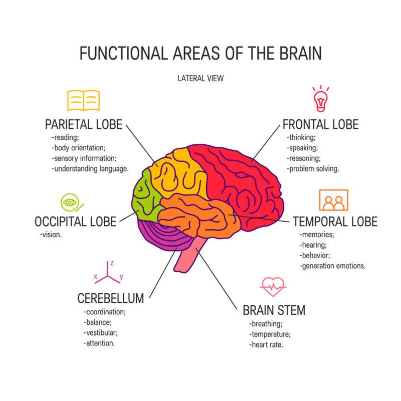 functional_areas_brain
