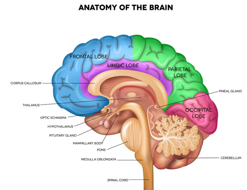 regions_of_brain