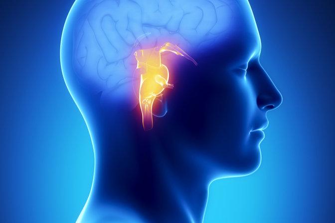 brain stem location