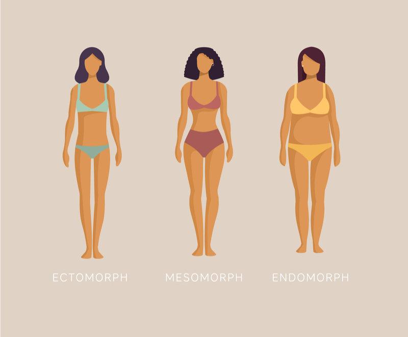 3 types of bodies