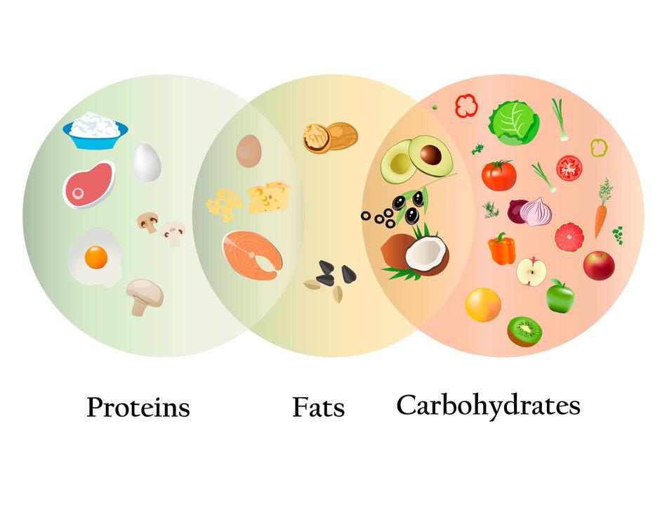 endomorph 101 diet