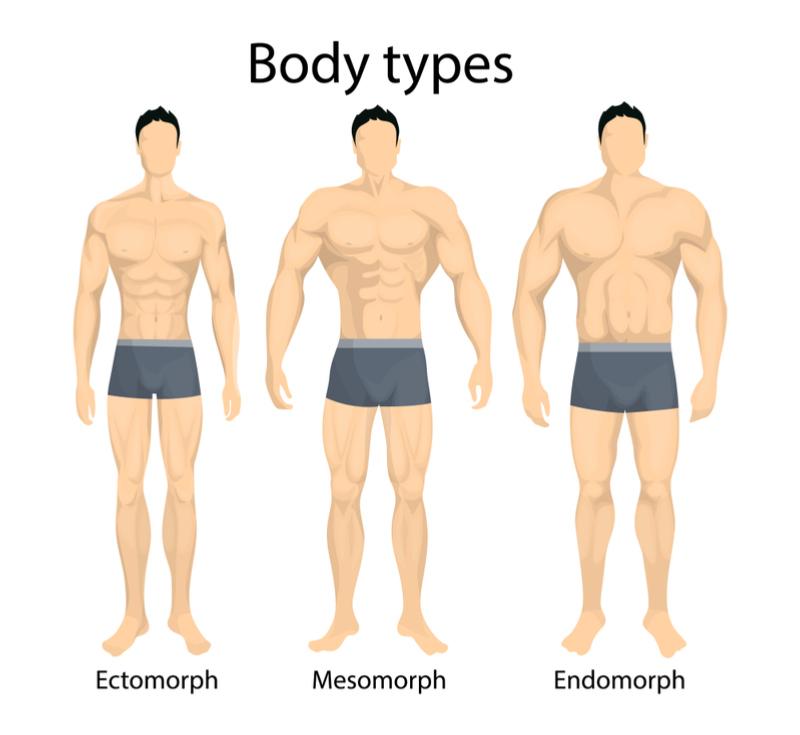 three_somatotypes