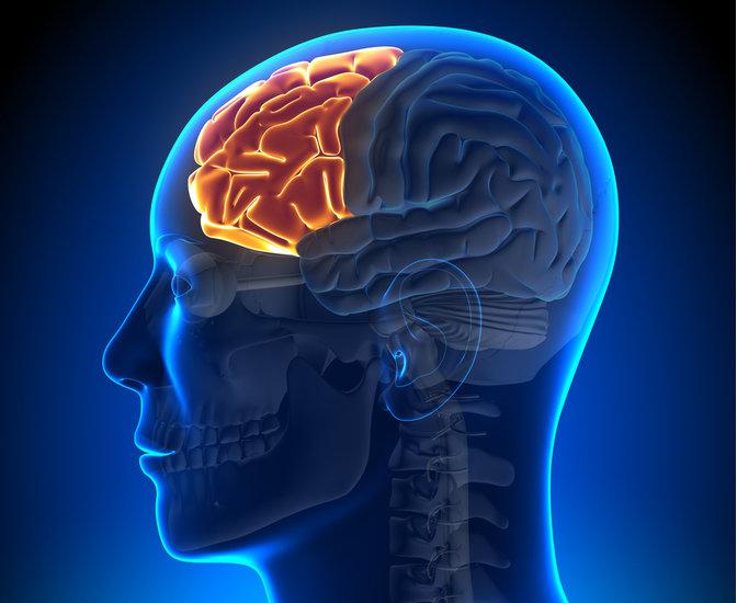 left frontal lobe